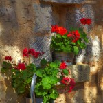 Solaris_Dalmatian_ethno_village_garden_a_lot_of_flowers_gastro_offer_blog_deatil